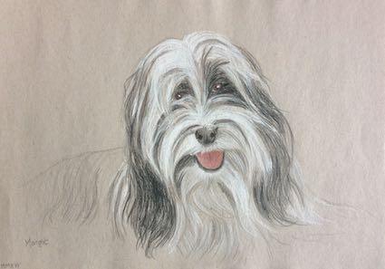 Harige hond