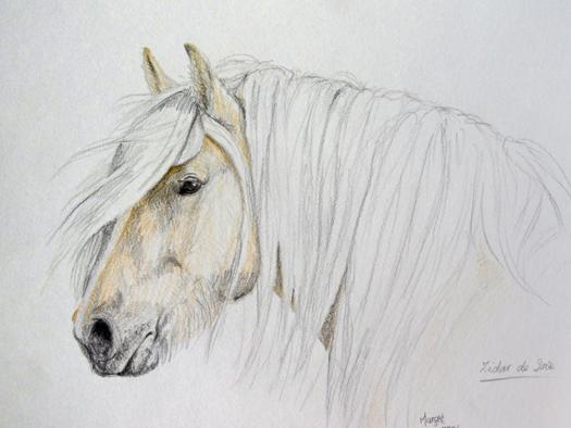Galerie dierenportretten
